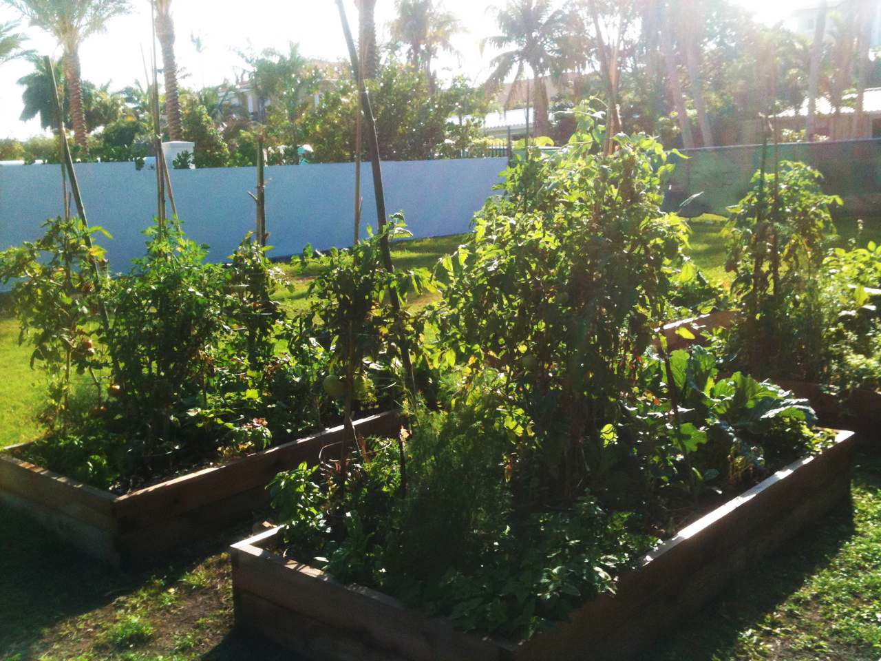 Page 8 Of 8 Planting Organic Vegetables Herbs And Fruits In South Florida Planting