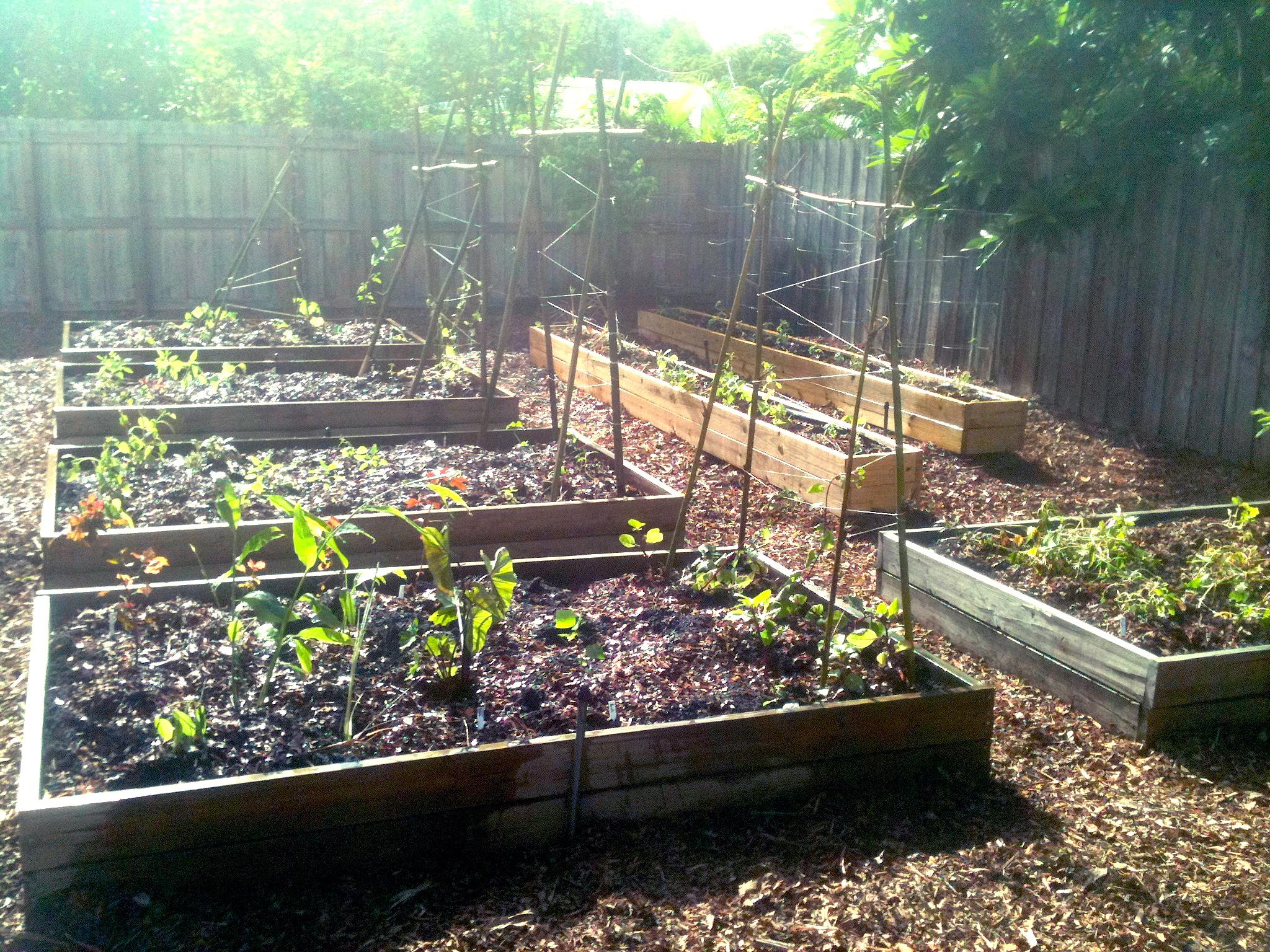 the ultimate backyard edible raised bed sheet mulch makeover in north