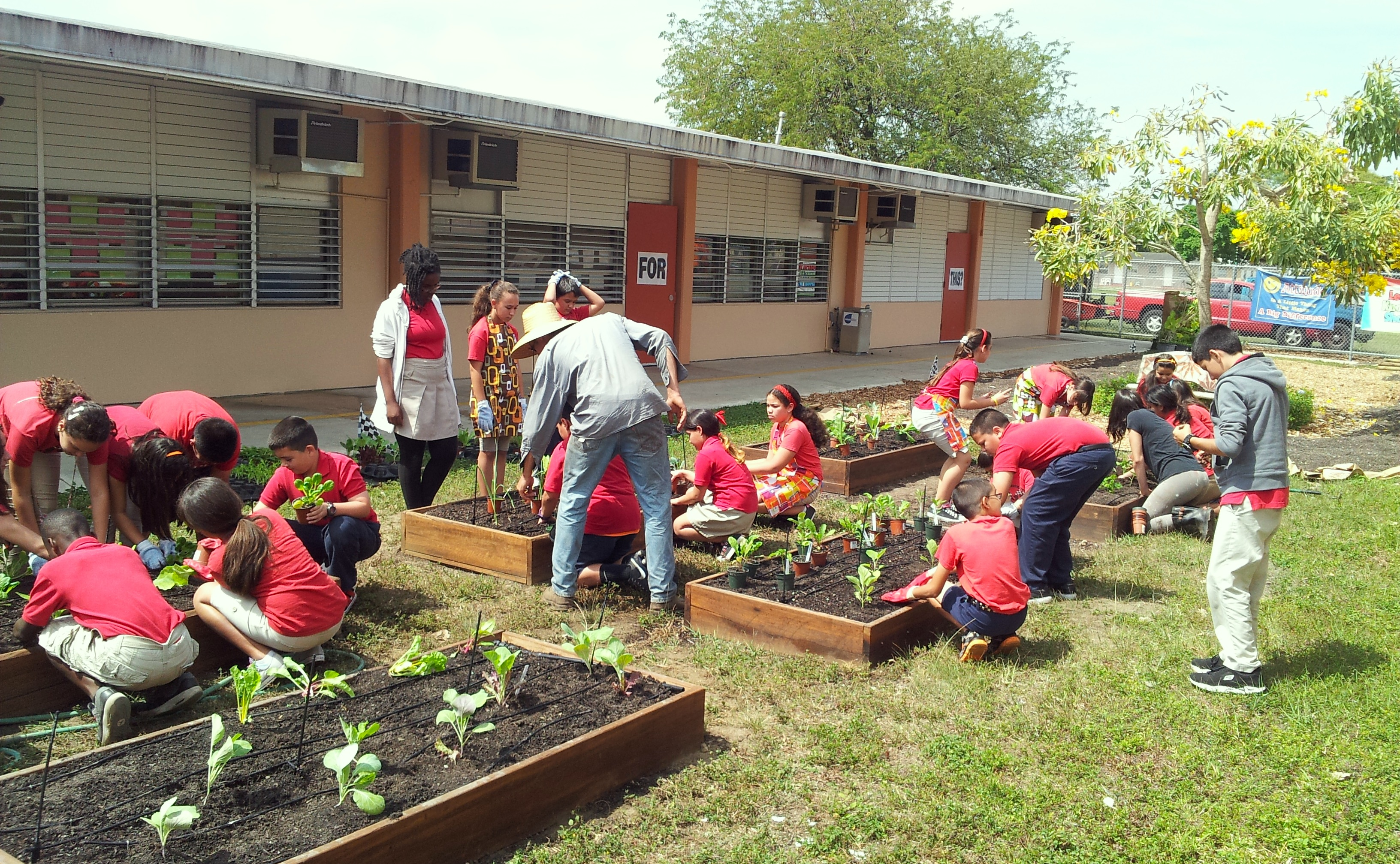 how to make a school garden