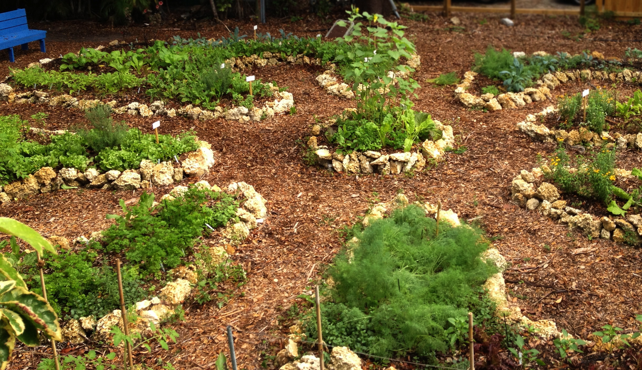 Garden to Table: As local as food gets -